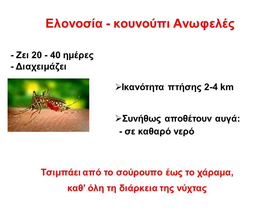 Ελονοσία - κουνούπι Aνωφελές