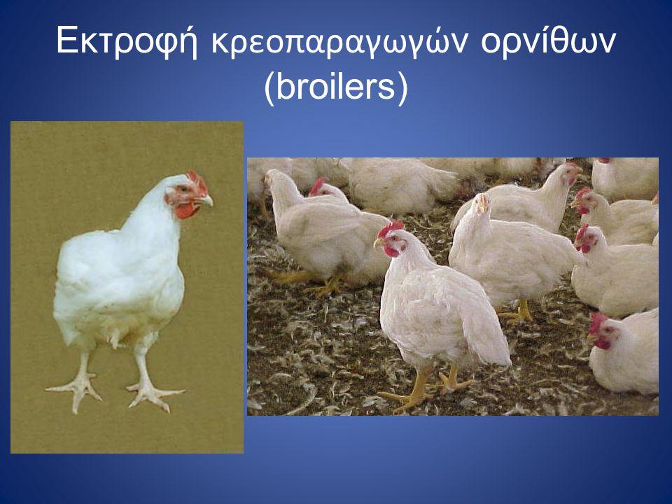Εκτροφή κρεοπαραγωγών ορνίθων (broilers)