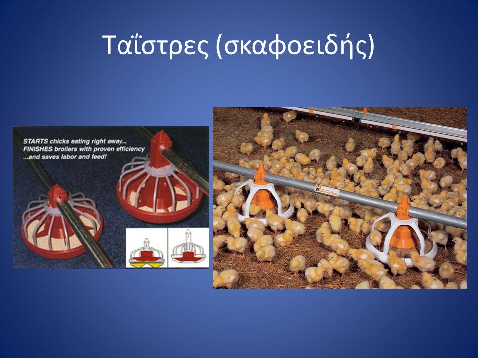 Ταΐστρες (σκαφοειδής)