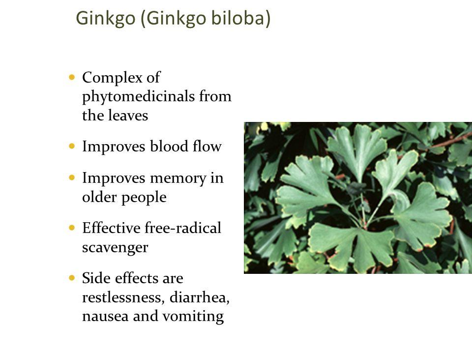 Ginkgo (Ginkgo biloba)