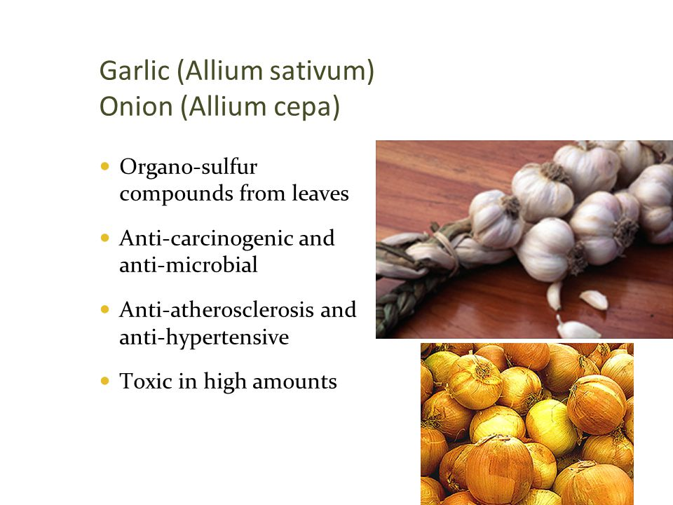 Garlic (Allium sativum) Onion (Allium cepa)