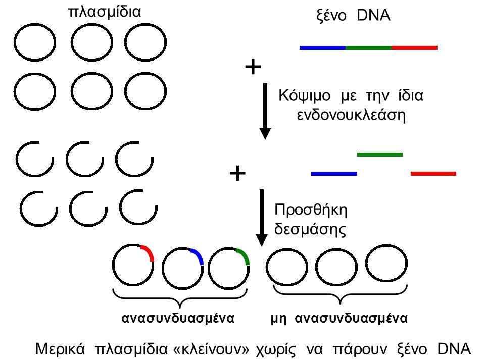 + + πλασμίδια ξένο DNA Κόψιμο με την ίδια ενδονουκλεάση
