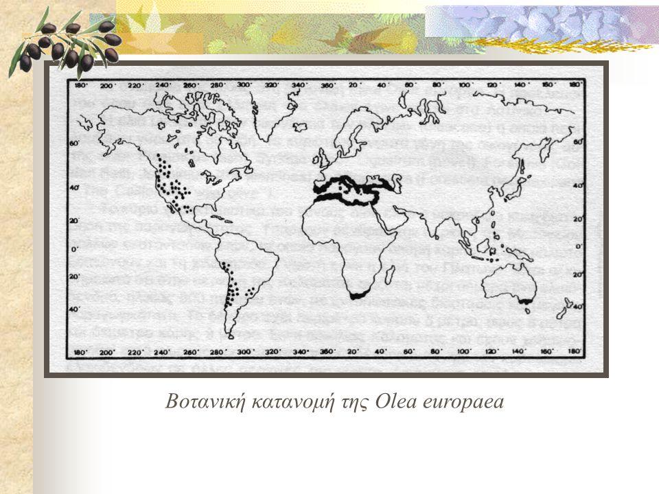 Βοτανική κατανομή της Olea europaea