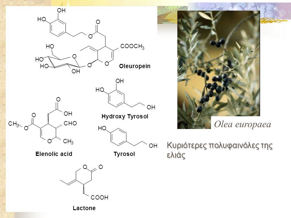 Olea europaea Κυριότερες πολυφαινόλες της ελιάς O H C l e u r o p i n
