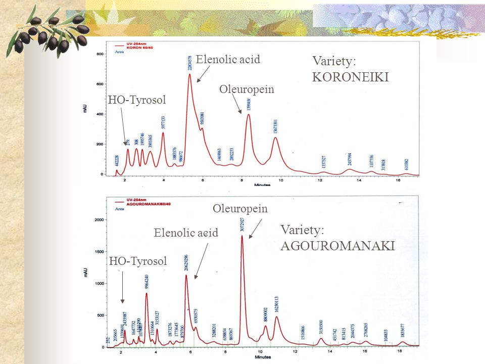 Variety: KORONEIKI Variety: AGOUROMANAKI Elenolic acid Oleuropein