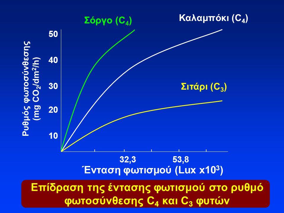 Επίδραση της έντασης φωτισμού στο ρυθμό φωτοσύνθεσης C4 και C3 φυτών