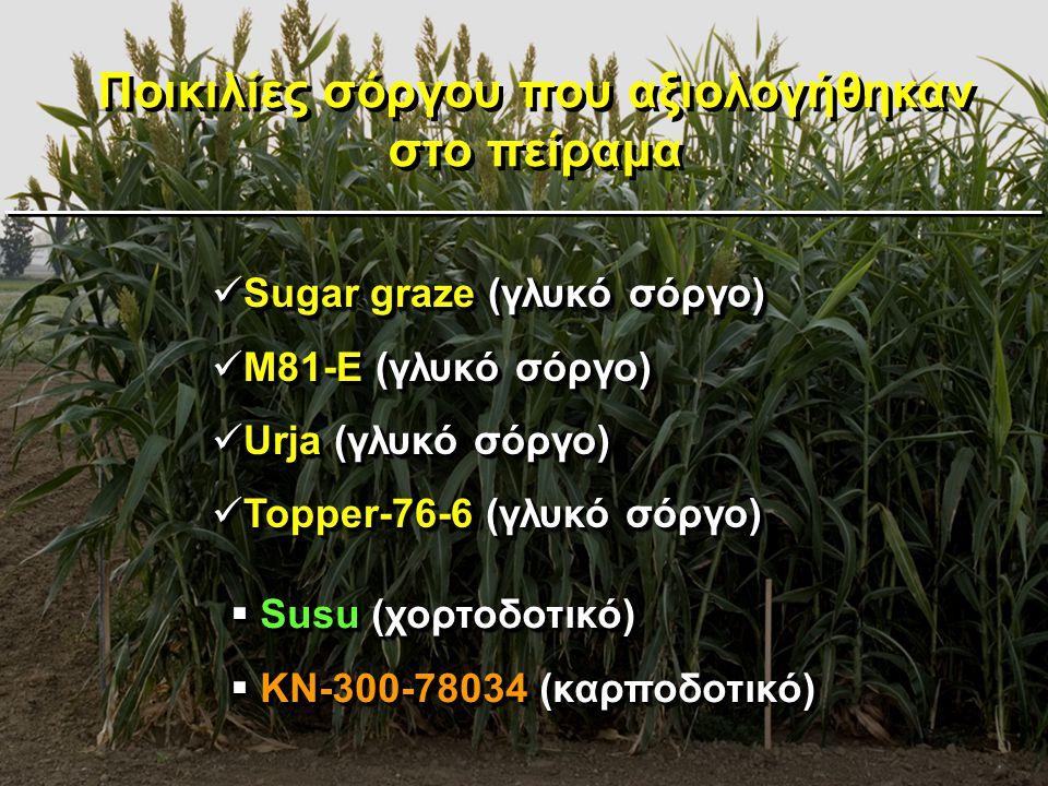 Ποικιλίες σόργου που αξιολογήθηκαν στο πείραμα