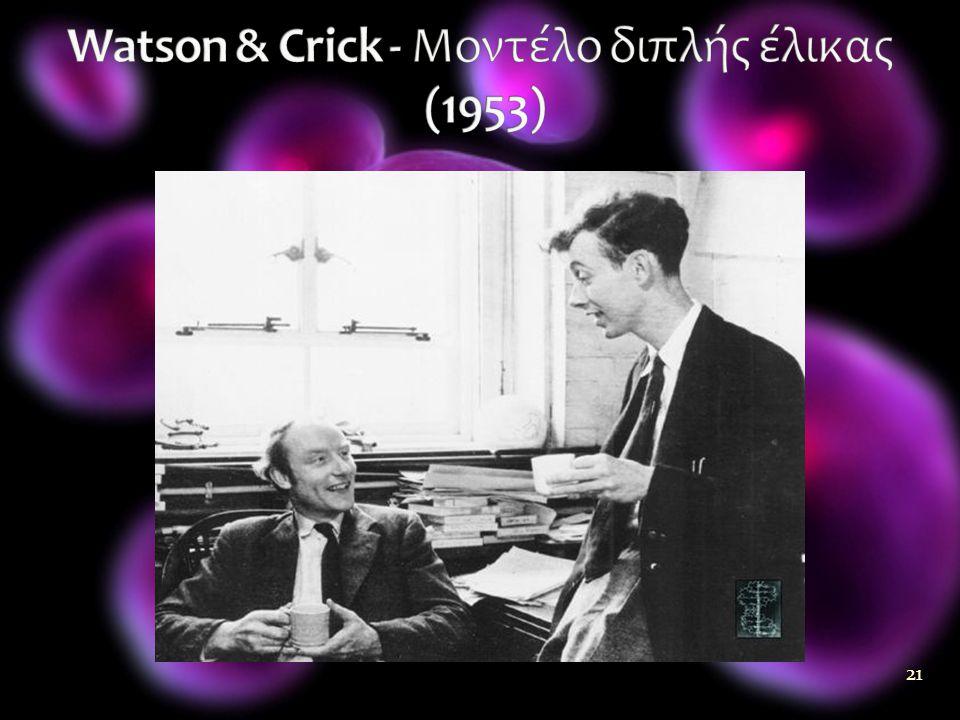 Watson & Crick - Μοντέλο διπλής έλικας (1953)
