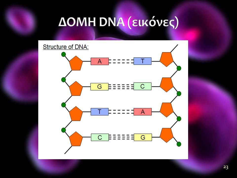 ΔΟΜΗ DNA (εικόνες)