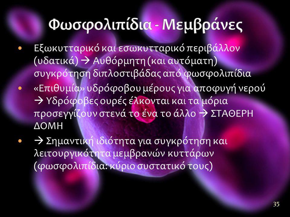 Φωσφολιπίδια - Μεμβράνες