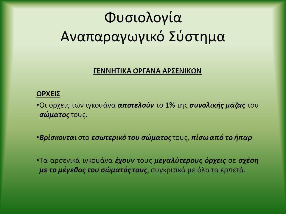 Φυσιολογία Αναπαραγωγικό Σύστημα