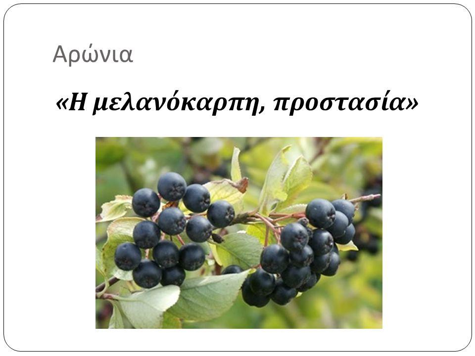 Αρώνια «Η μελανόκαρπη, προστασία»