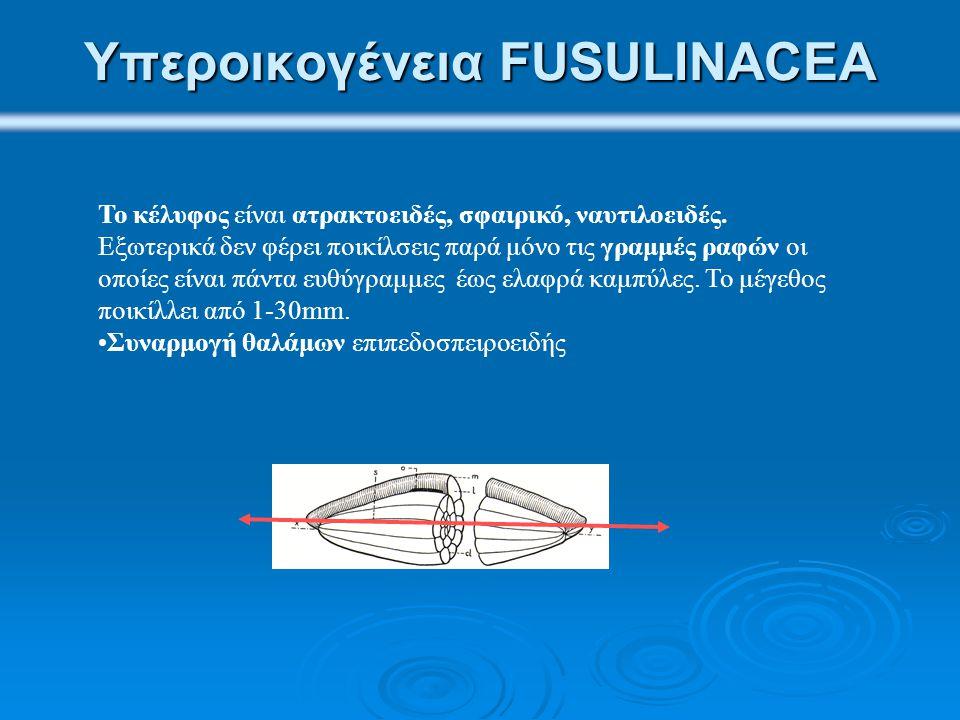 Υπεροικογένεια FUSULINACEA
