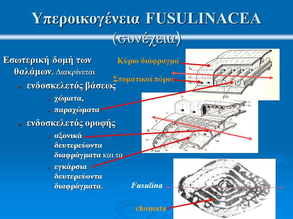 Υπεροικογένεια FUSULINACEA (συνέχεια)