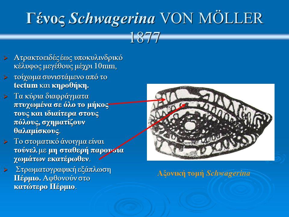 Γένος Schwagerina VON MÖLLER 1877