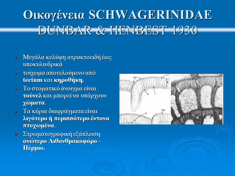 Οικογένεια SCHWAGERINIDAE DUNBAR & HENBEST 1930