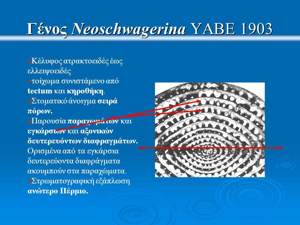 Γένος Neoschwagerina YABE 1903