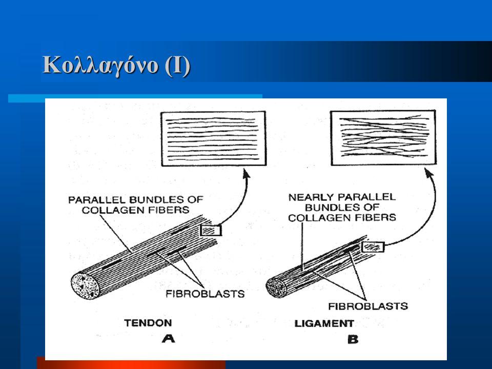 Κολλαγόνο (I)