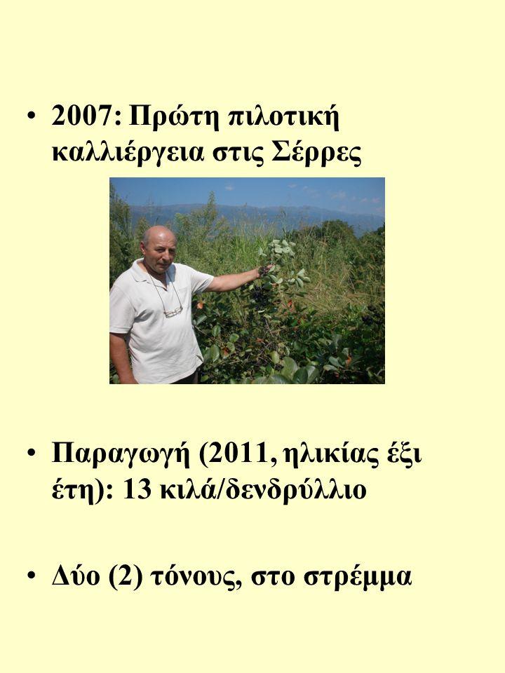 2007: Πρώτη πιλοτική καλλιέργεια στις Σέρρες