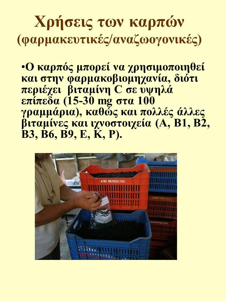 Χρήσεις των καρπών (φαρμακευτικές/αναζωογονικές)