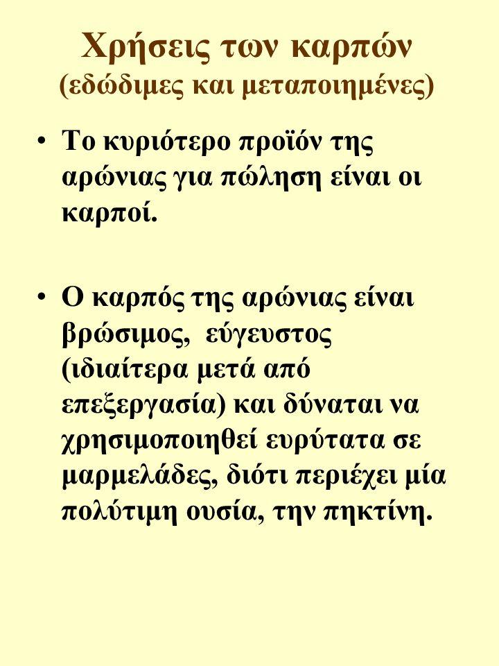 Χρήσεις των καρπών (εδώδιμες και μεταποιημένες)