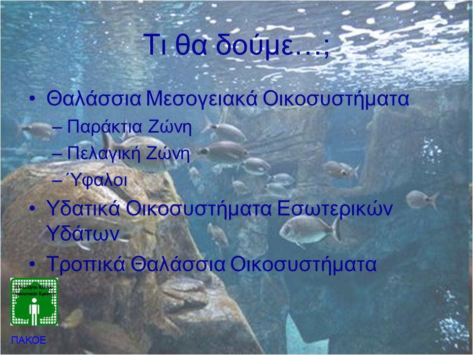 Τι θα δούμε…; Θαλάσσια Μεσογειακά Οικοσυστήματα