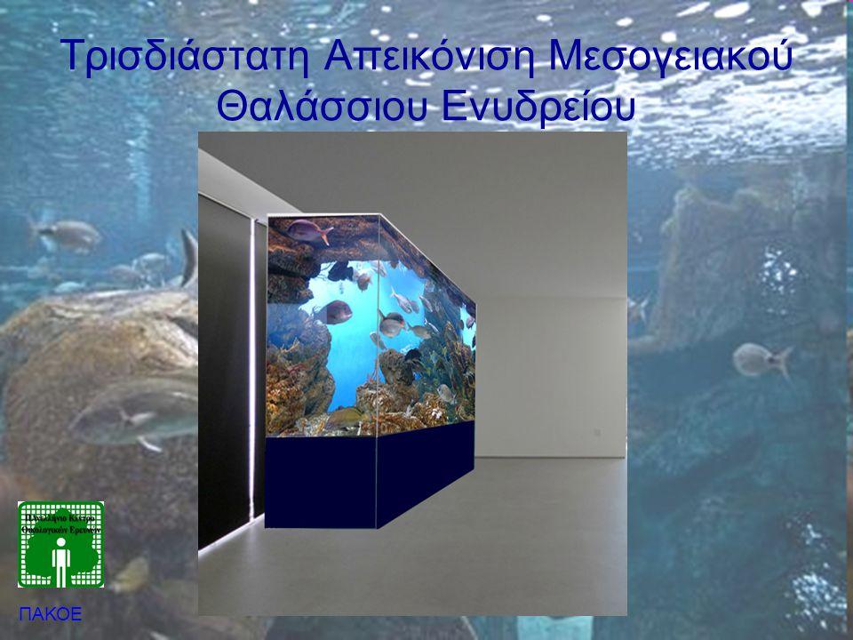 Τρισδιάστατη Απεικόνιση Μεσογειακού Θαλάσσιου Ενυδρείου