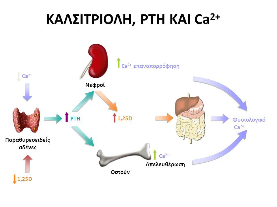 ΚΑΛΣΙΤΡΙΟΛΗ, PTH ΚΑΙ Ca2+