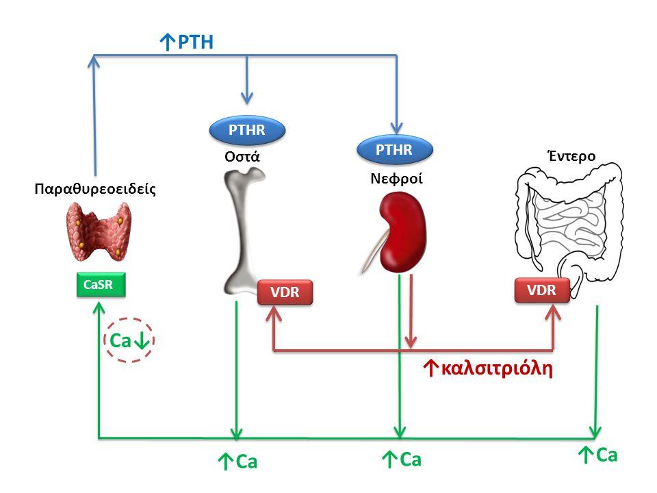 ↑PTH Ca↓ ↑καλσιτριόλη ↑Ca ↑Ca ↑Ca PTHR PTHR Οστά Έντερο Νεφροί
