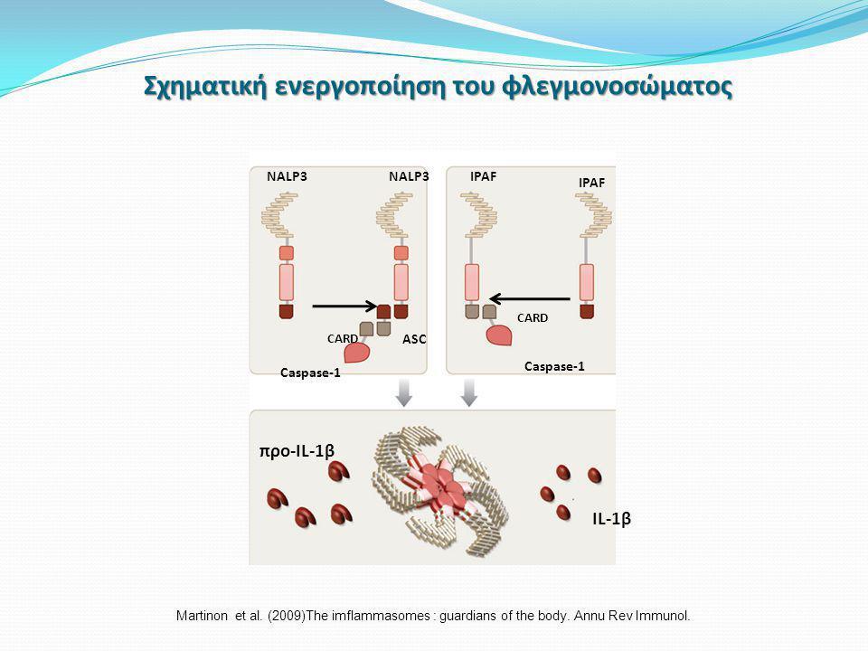 Σχηματική ενεργοποίηση του φλεγμονοσώματος