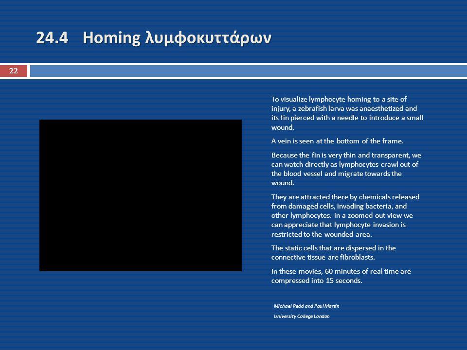 24.4 Homing λυμφοκυττάρων