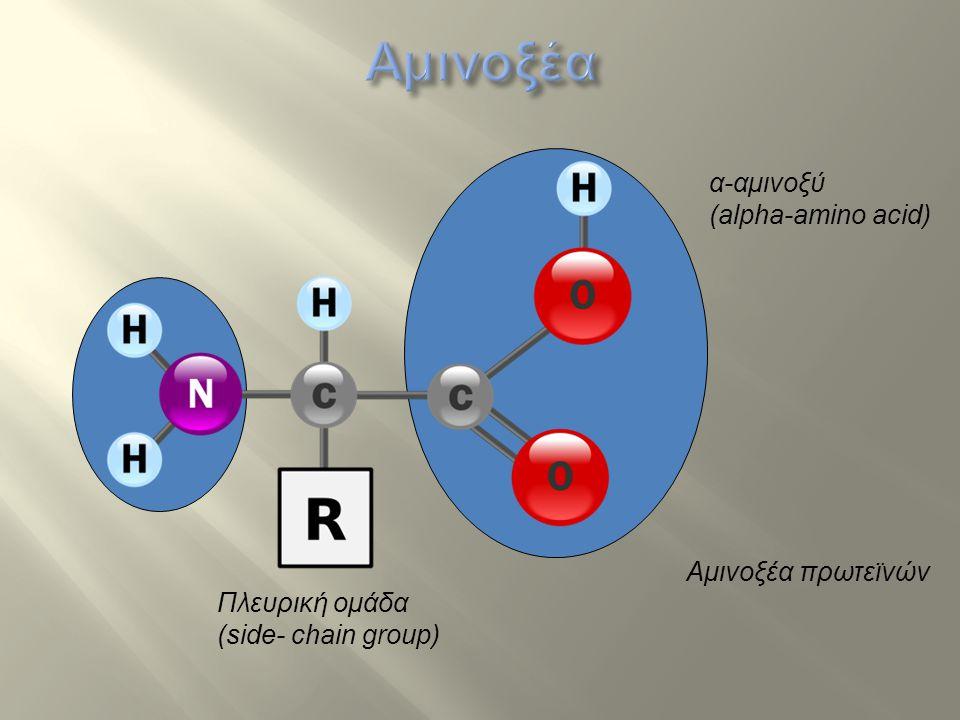 Αμινοξέα α-αμινοξύ (alpha-amino acid) Αμινοξέα πρωτεϊνών