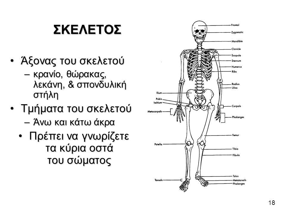 Πρέπει να γνωρίζετε τα κύρια οστά του σώματος