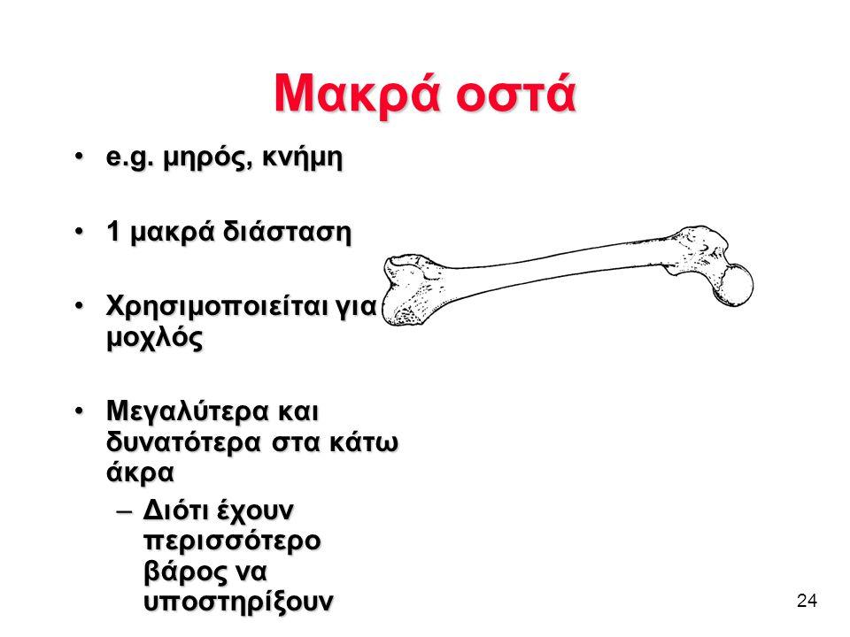 Μακρά οστά e.g. μηρός, κνήμη 1 μακρά διάσταση