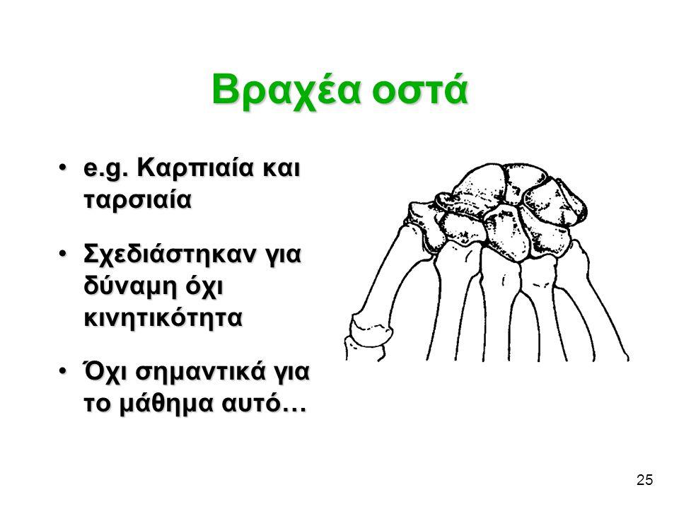 Βραχέα οστά e.g. Καρπιαία και ταρσιαία
