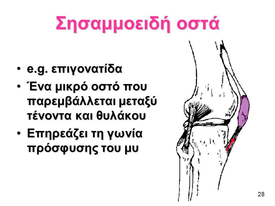 Σησαμμοειδή οστά e.g. επιγονατίδα
