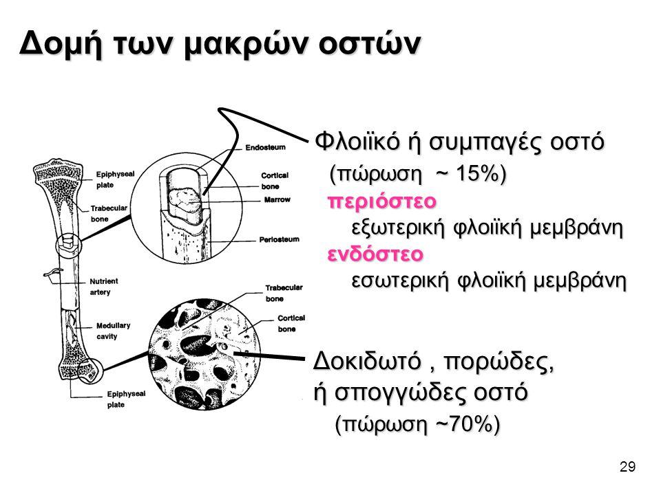 Δομή των μακρών οστών Φλοιϊκό ή συμπαγές οστό (πώρωση ~ 15%)