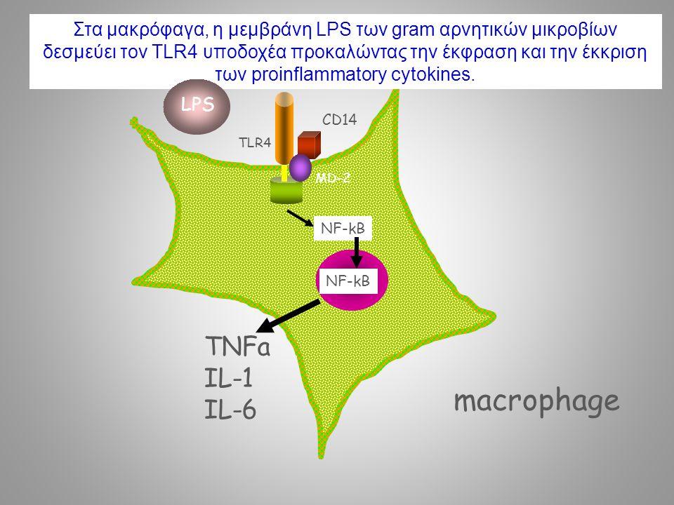 macrophage TNFa IL-1 IL-6