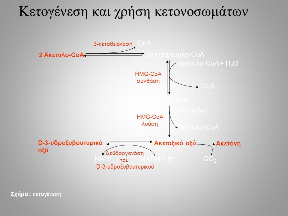 Κετογένεση και χρήση κετονοσωμάτων