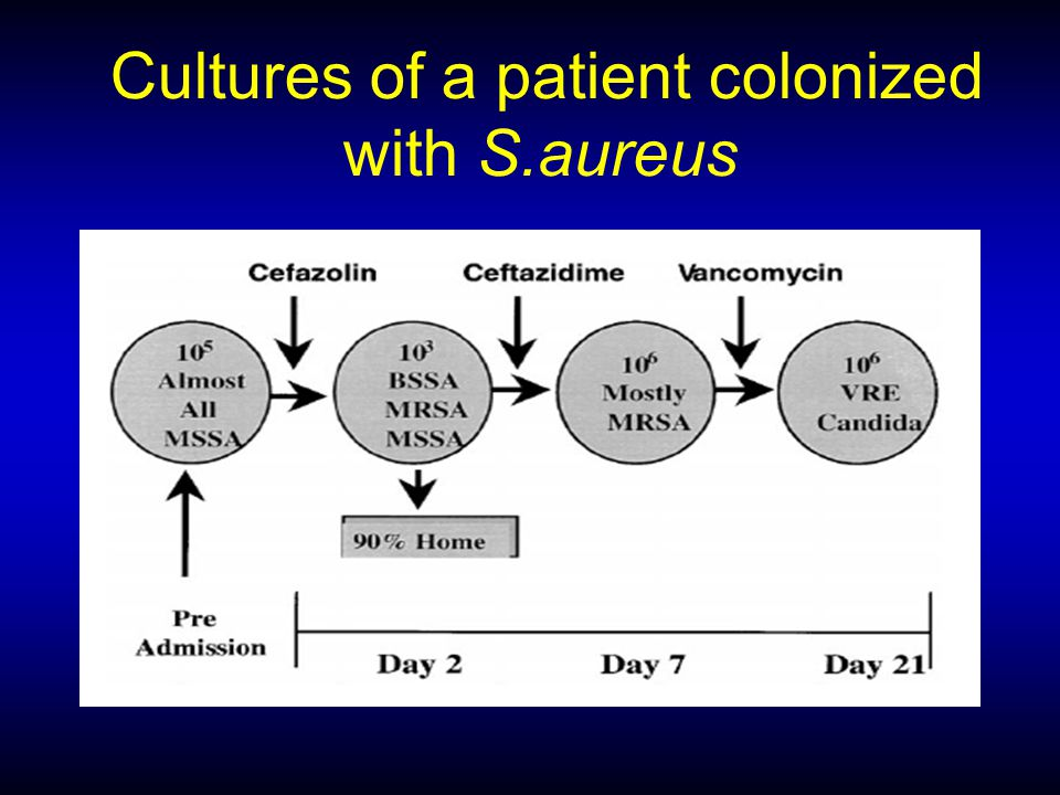 Cultures of a patient colonized with S.aureus