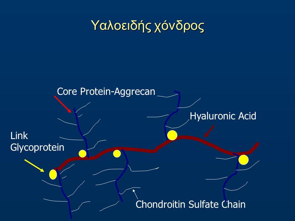 Υαλοειδής χόνδρος Core Protein-Aggrecan Hyaluronic Acid