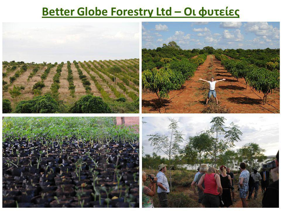 Better Globe Forestry Ltd – Οι φυτείες