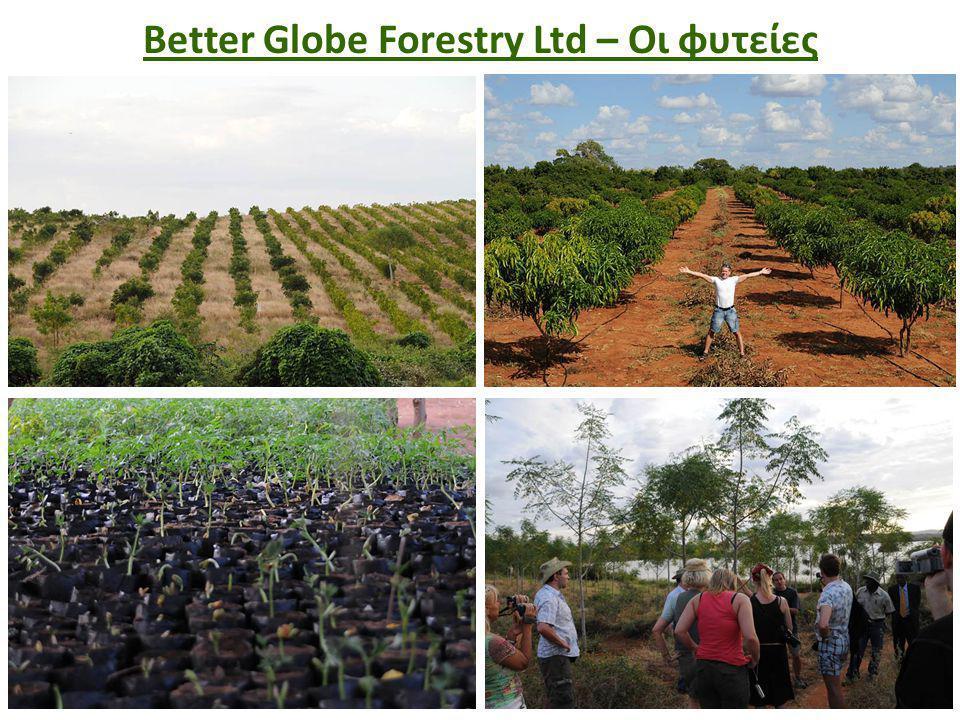 Better Globe Forestry Ltd – Οι φυτείες