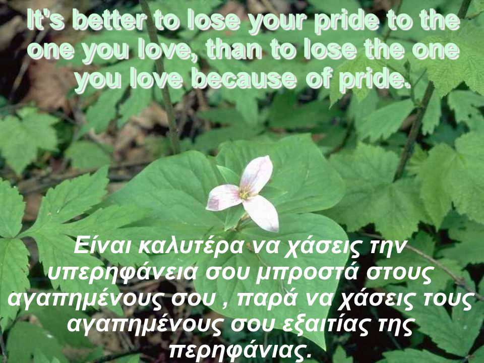 It s better to lose your pride to the one you love, than to lose the one you love because of pride.