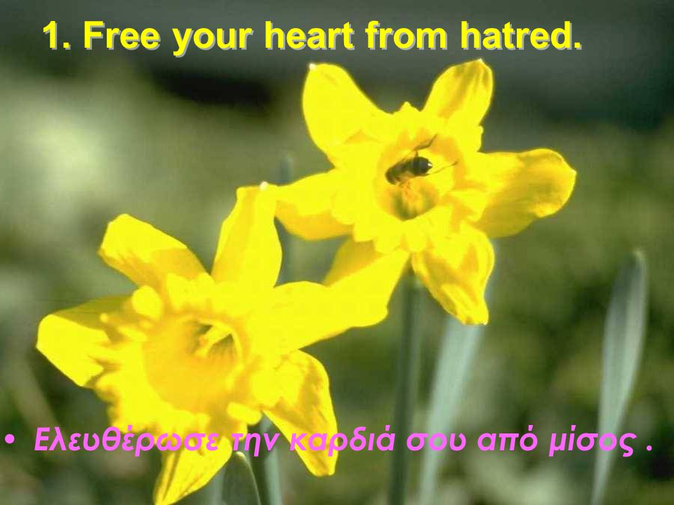 1. Free your heart from hatred.