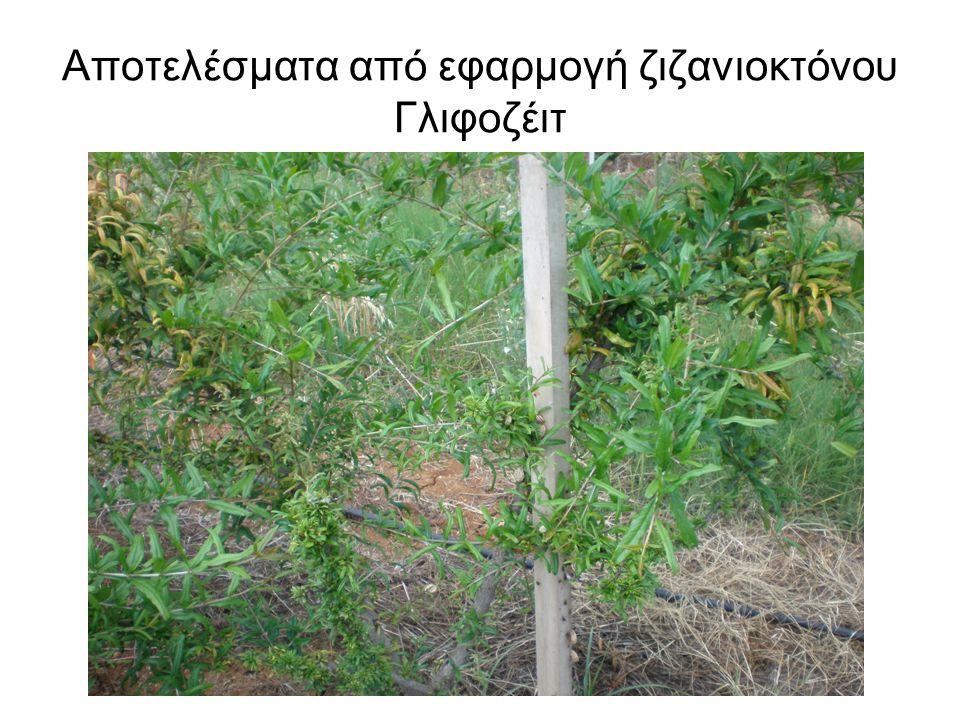Αποτελέσματα από εφαρμογή ζιζανιοκτόνου Γλιφοζέιτ