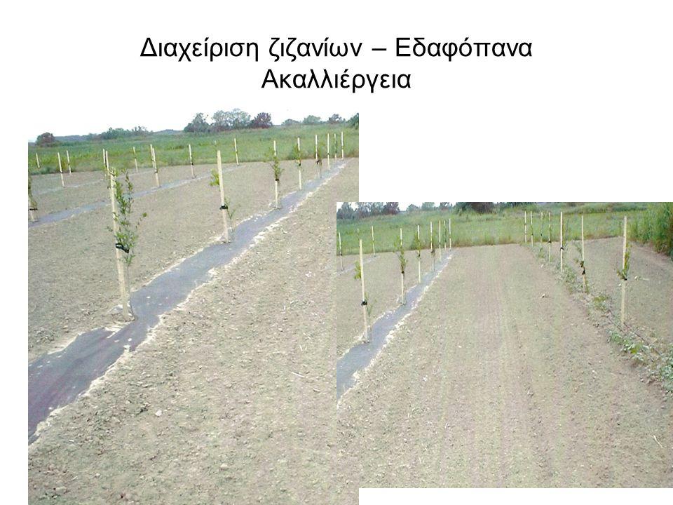 Διαχείριση ζιζανίων – Εδαφόπανα Ακαλλιέργεια