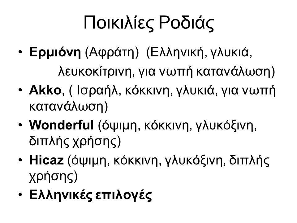 Ποικιλίες Ροδιάς Ερμιόνη (Aφράτη) (Ελληνική, γλυκιά,