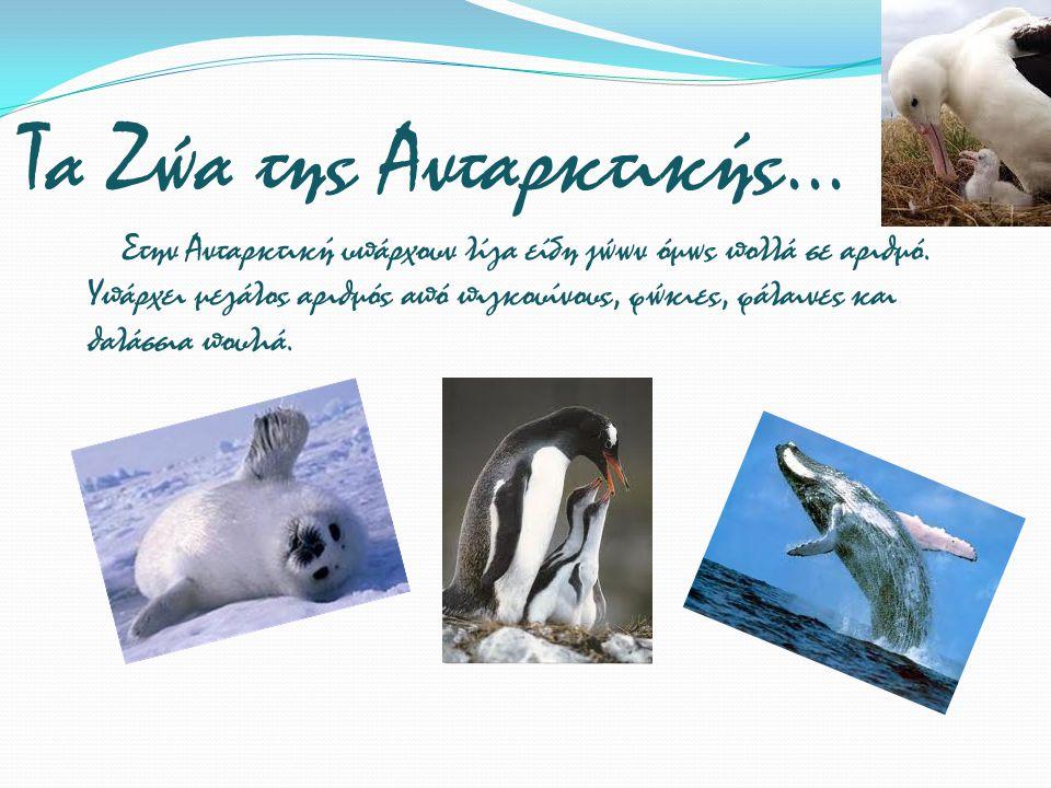 Τα Ζώα της Ανταρκτικής...