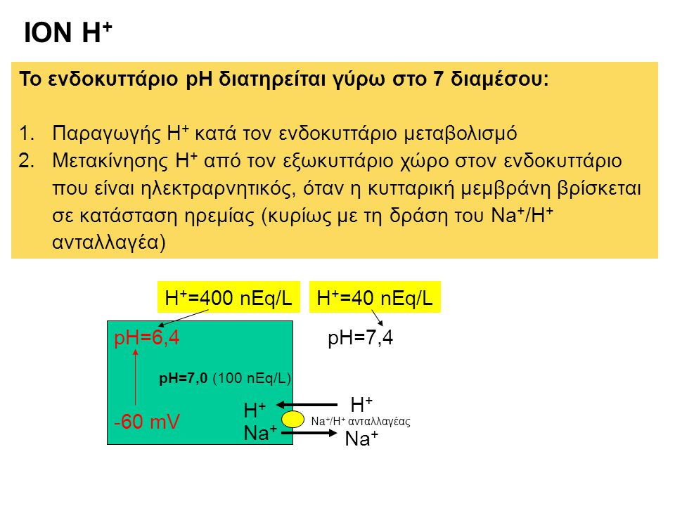ION H+ Το ενδοκυττάριο pH διατηρείται γύρω στο 7 διαμέσου: